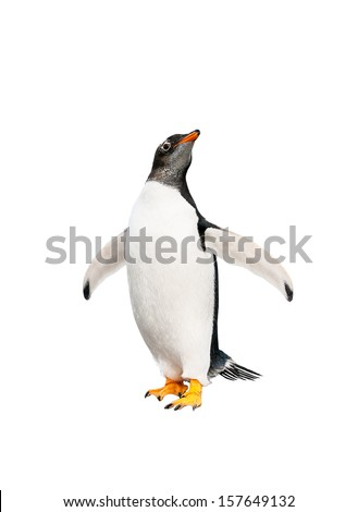 gentoo penguin over white background - stock photo