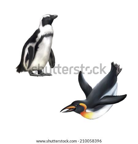 gentoo penguin. Vector illustration isolated on white background - stock photo