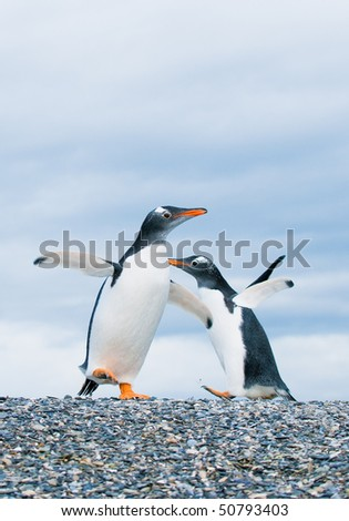 gentoo penguins - stock photo