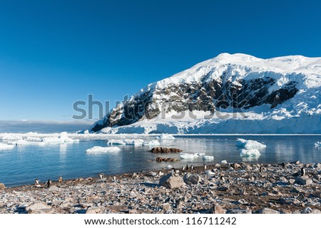 Gentoo penguins colony in Paradise bay, Antarctica - stock photo
