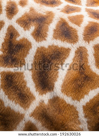 Genuine leather skin of giraffe, close up - stock photo