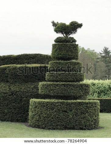 geometric shape bush - stock photo