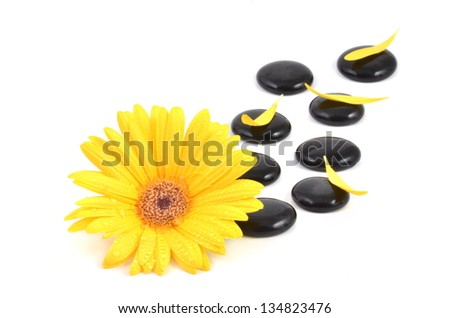 Gerbera daisy  and spa stones with petals, isolated on white