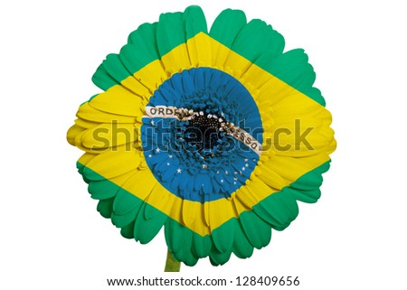 gerbera daisy flower in colors national flag of brazil on white background as concept and symbol of love, beauty, innocence, and positive emotions - stock photo