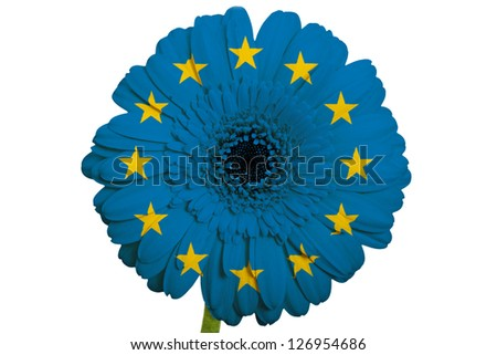 gerbera daisy flower in colors national flag of europe on white background as concept and symbol of love, beauty, innocence, and positive emotions - stock photo
