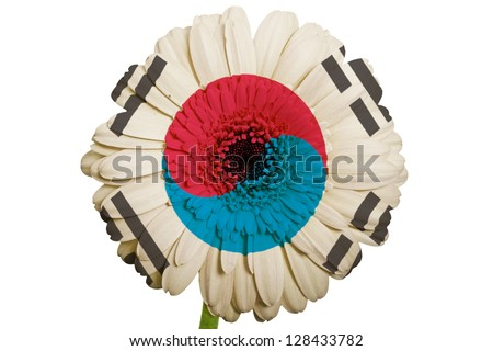 gerbera daisy flower in colors national flag of south korea on white background as concept and symbol of love, beauty, innocence, and positive emotions - stock photo