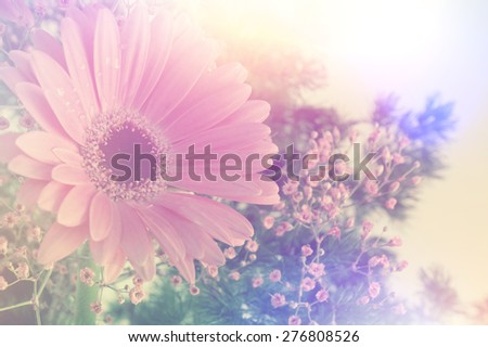 Gerbera daisy image with vintage retro effect - stock photo