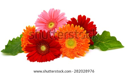 Gerbera flower isolated on white background - stock photo