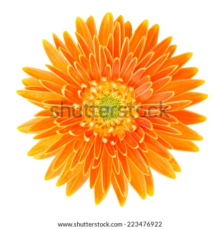 gerbera flower isolated on white background with clipping path - stock photo