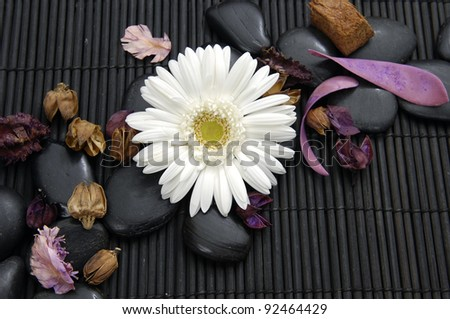 gerbera flower with flower dried petals and zen stone - stock photo