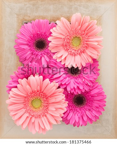 Gerbera Flowers in a wooden frame  - stock photo