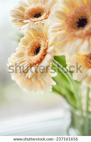 Gerberas bouquet close up image - stock photo