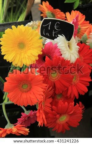 Gerberas in various colors, flower market Aix en Provence - stock photo