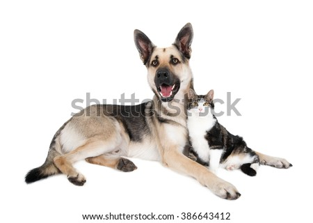German Shepherd (crossbreed) and cat in a friendly pose. Isolated on white. - stock photo