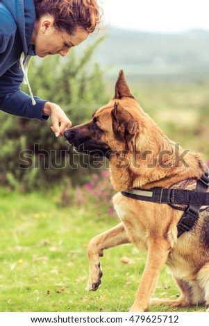 german shepherd dog with trainer outdoor