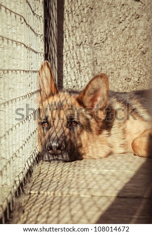 German shepherd in a cage - stock photo
