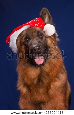 German Shepherd in a Christmas hat. Blue background - stock photo