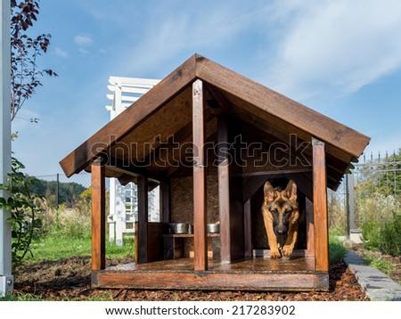 German shepherd leaving its wooden kennel - stock photo