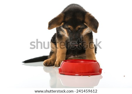German shepherd puppy with food bowl - stock photo