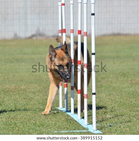 German Shepherd Weaving Through Poles at a Dog Agility Trial - stock photo