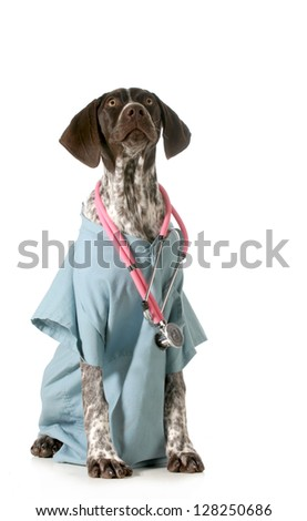 german short-haired pointed puppy dressed as a vet on white background - stock photo