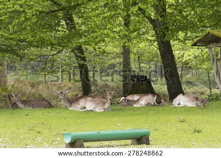 Germany's Red Deer - stock photo
