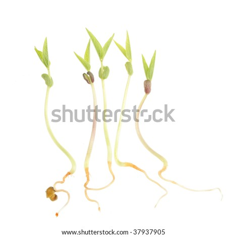 Germinating and sprouting seeds isolated on white