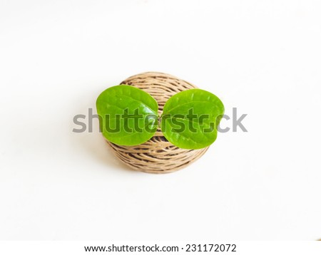 Germinating seed isolated - stock photo