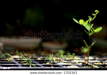 germination - stock photo