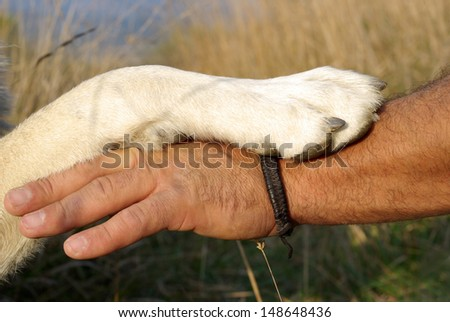 Gesture of friendship between man and dog - stock photo