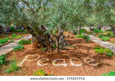 Gethsemane garden, Israel - stock photo