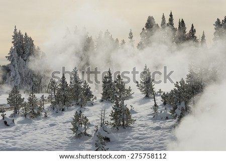 Geysers teaming in a snow-covered conifer forest. Yellowstone National Park. - stock photo