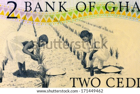 GHANA - CIRCA 1979: Workers Tending Plants on 2 Cedis 1979 Banknote from Ghana. - stock photo