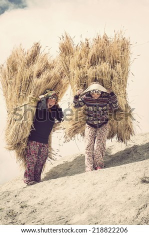 GHASA, NEPAL - OCTOBER 4: Two unidentified Nepali woman carry huge stacks of hay, as they carry it up into the mountains on October 4, 2013 in Ghasa. - stock photo