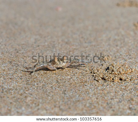 Ghost Crab (Ocypode ceratophthalama) on sand in south of thailand