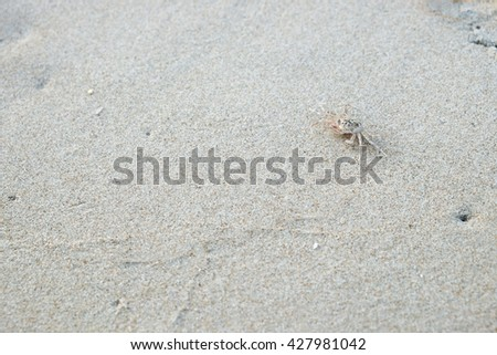 Ghost crab  on white sand beach. - stock photo
