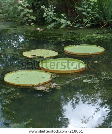 Giant Amazonian lily pads - stock photo