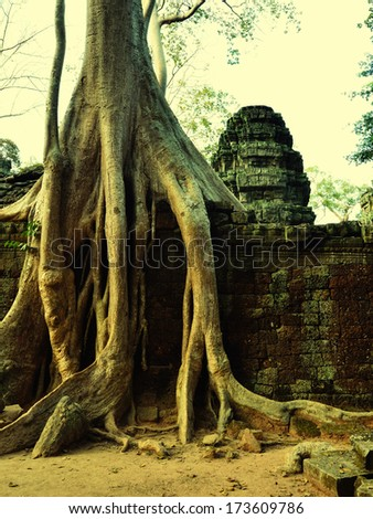 Giant banyan tree covering the stones of the fascinating temple of Ta Prohm in Angkor Wat at evening, Siem Reap, Cambodia. Toned  - stock photo