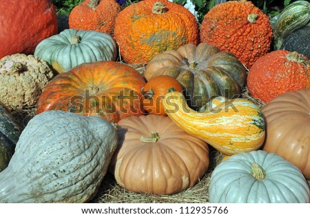 Giant colorful gourds and huge blue hubbard squash at a local farm stand - stock photo
