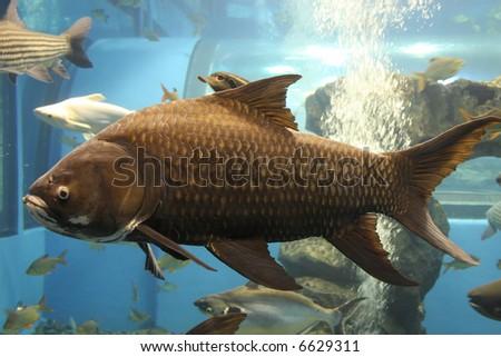 giant fish - stock photo