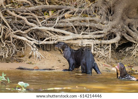 Otter Stock Images Royalty Free Images Vectors Shutterstock