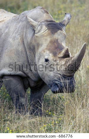 Giant Rhino in grassland - stock photo