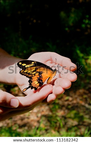 Giant swallowtail butterfly in a man's hands outside. - stock photo