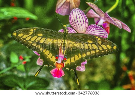 Giant swallowtail butterfly on orchids,digital oil painting - stock photo