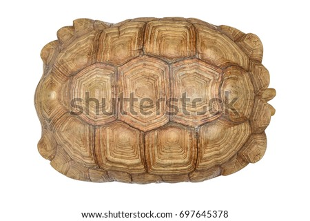 giant tortoise shell texture turtle carapace stock photo 697645378 shutterstock. Black Bedroom Furniture Sets. Home Design Ideas