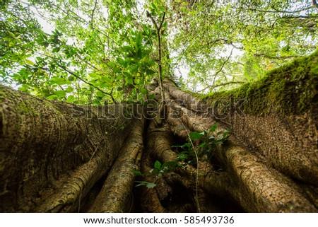 Under Angel Oak Tree Stock Photo 543718396 Shutterstock