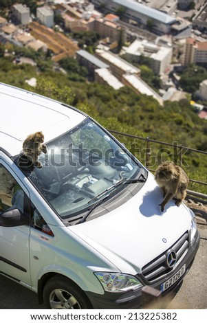 Gibraltar, UK - June 21: Tourists interacting with the wild monkeys (Barbary macaques) in Gibraltar, UK on June 21, 2014. The Barbary macaque in Gibraltar is the only wild monkey population in Europe.