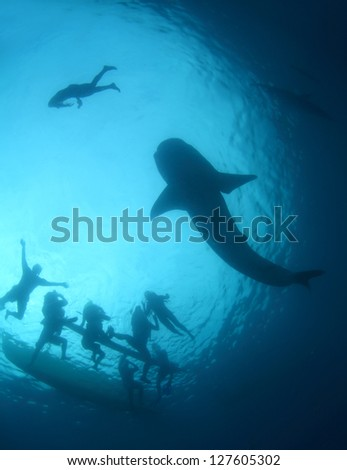 Gigantic whale shark gliding in a depth and group of snorkelers on a surface. Cebu island, Philippines - stock photo