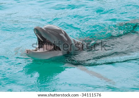 Giggling dolphin in turquoise water
