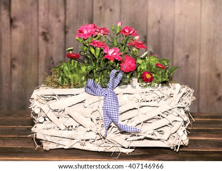 Gilly-flowers and Daisies in a white, wooden Basket, with wooden background, for decoration. - stock photo